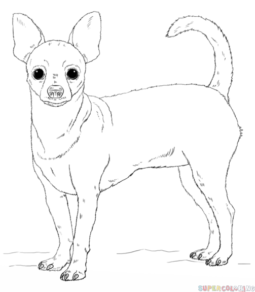 chihuahua outline chihuahua outline coloring coloring pages chihuahua outline
