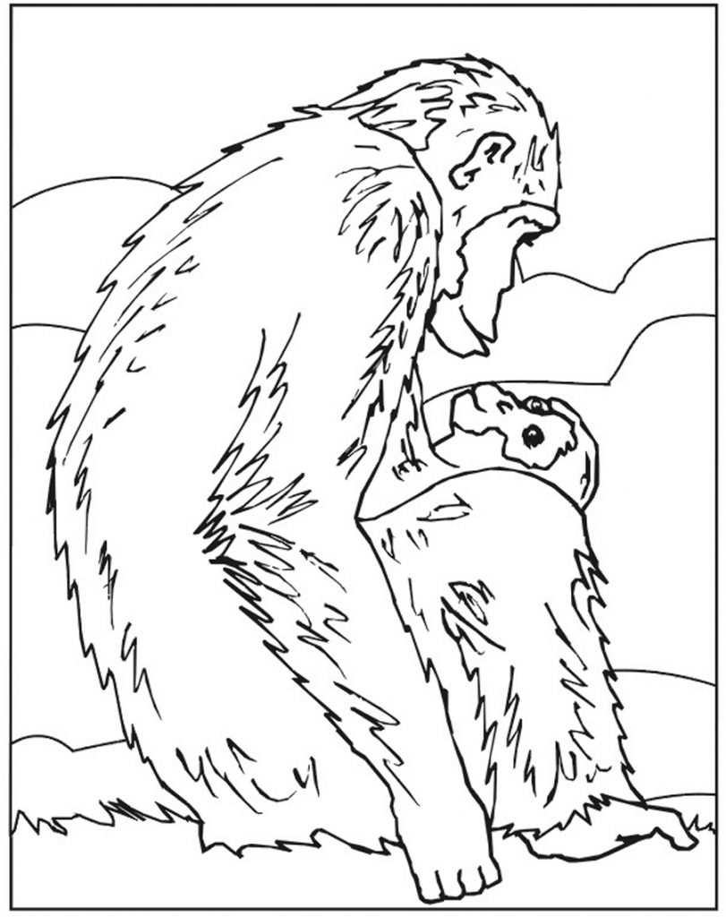 chimpanzee pictures to print chimpanzee pictures to print coloring home print to chimpanzee pictures