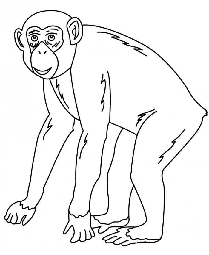chimpanzee pictures to print free printable chimpanzee coloring pages for kids chimpanzee pictures to print