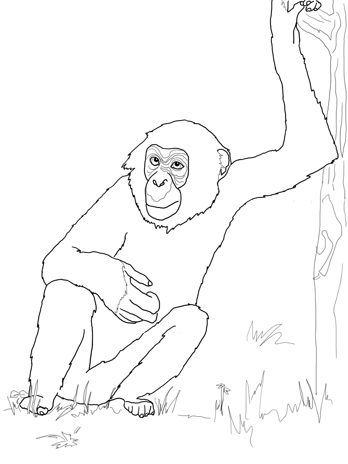 chimpanzee pictures to print free printable chimpanzee coloring pages for kids chimpanzee print to pictures