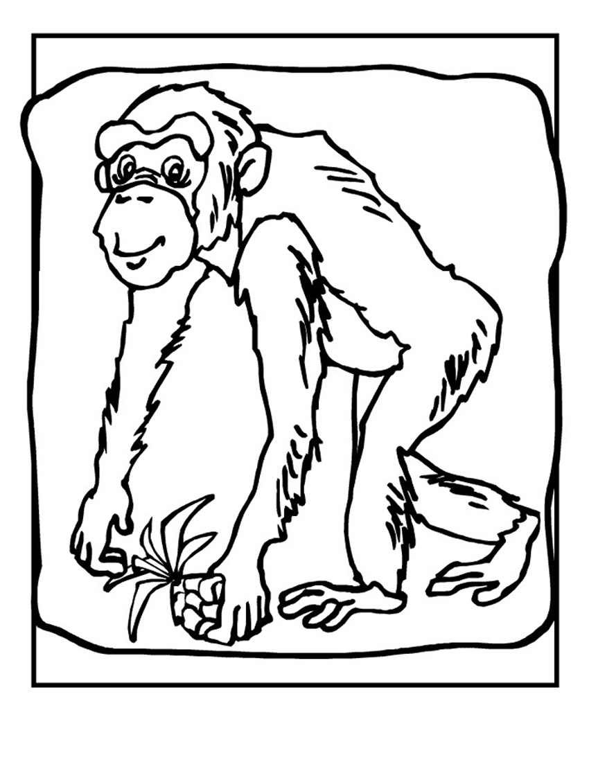chimpanzee pictures to print free printable chimpanzee coloring pages for kids print chimpanzee pictures to