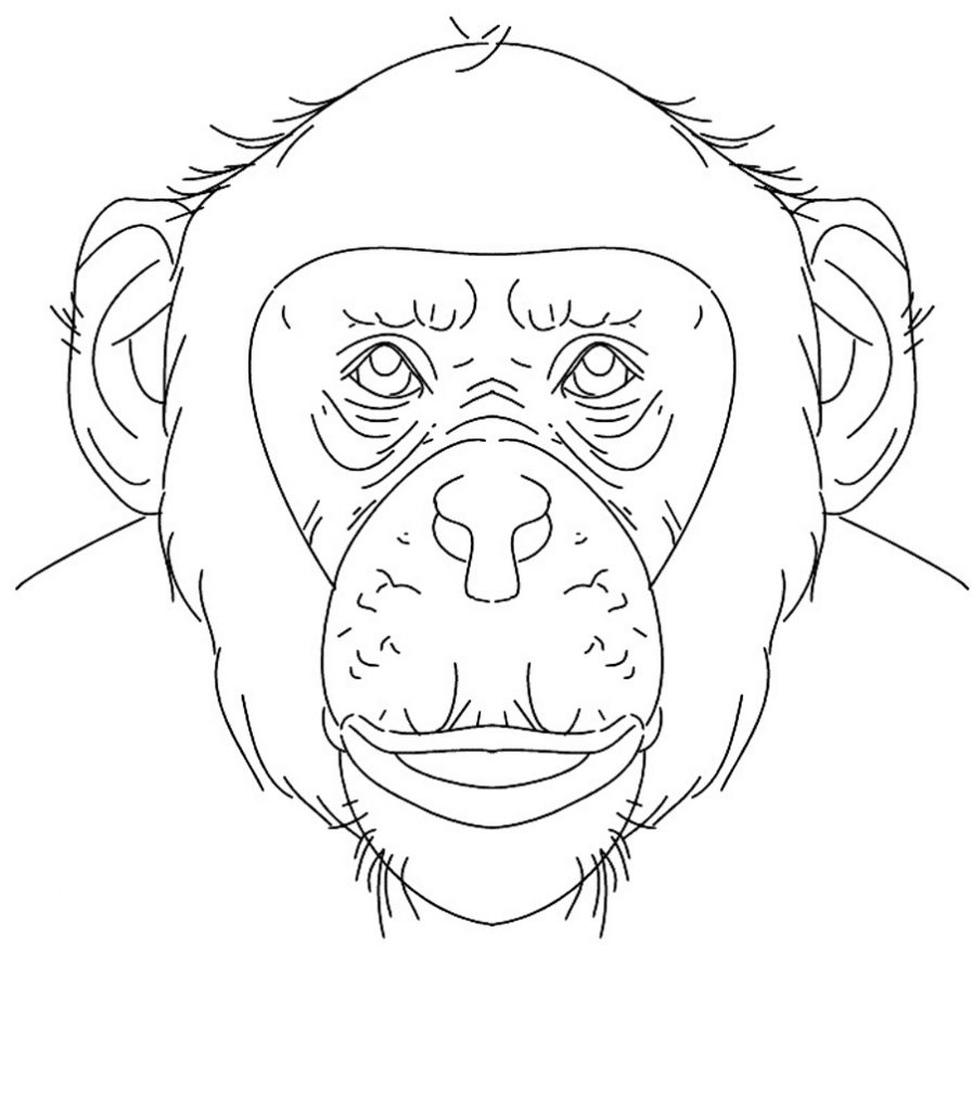 chimpanzee pictures to print free printable chimpanzee coloring pages for kids print chimpanzee to pictures