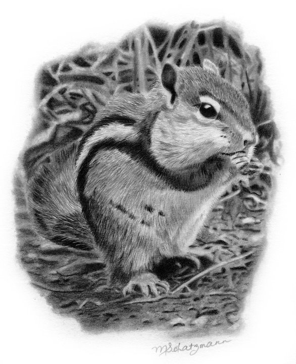 chipmunk drawing curious chipmunk drawing by abstract angel artist stephen k drawing chipmunk