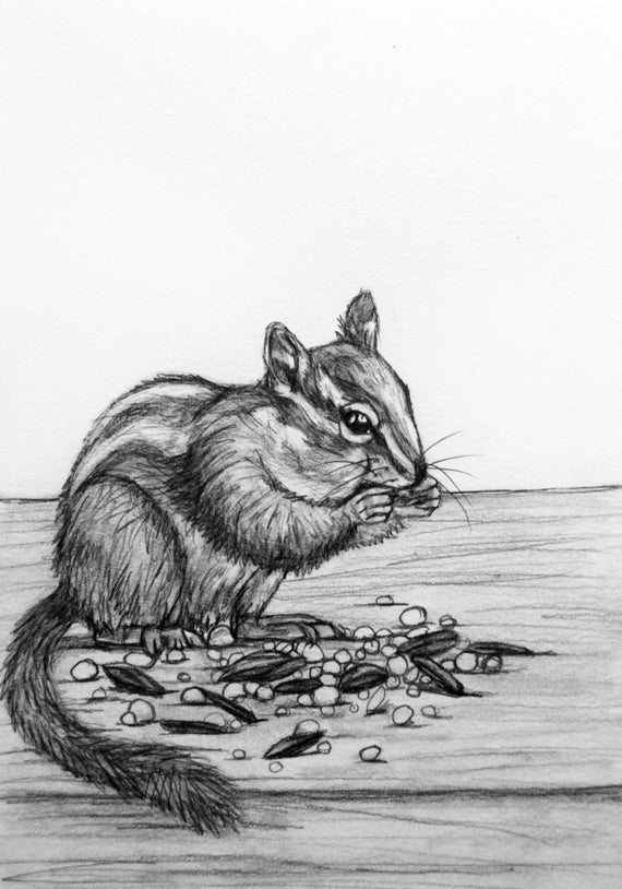 chipmunk drawing daily drawing 70 a chipmunk attempt practice ink drawing chipmunk
