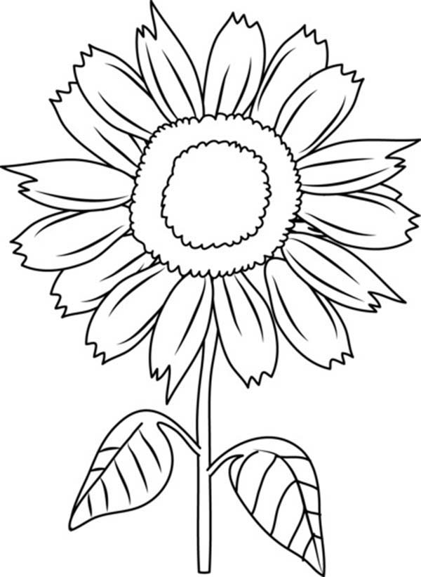 clipart coloring pages sunflowers clipart to color 20 free cliparts download coloring clipart pages