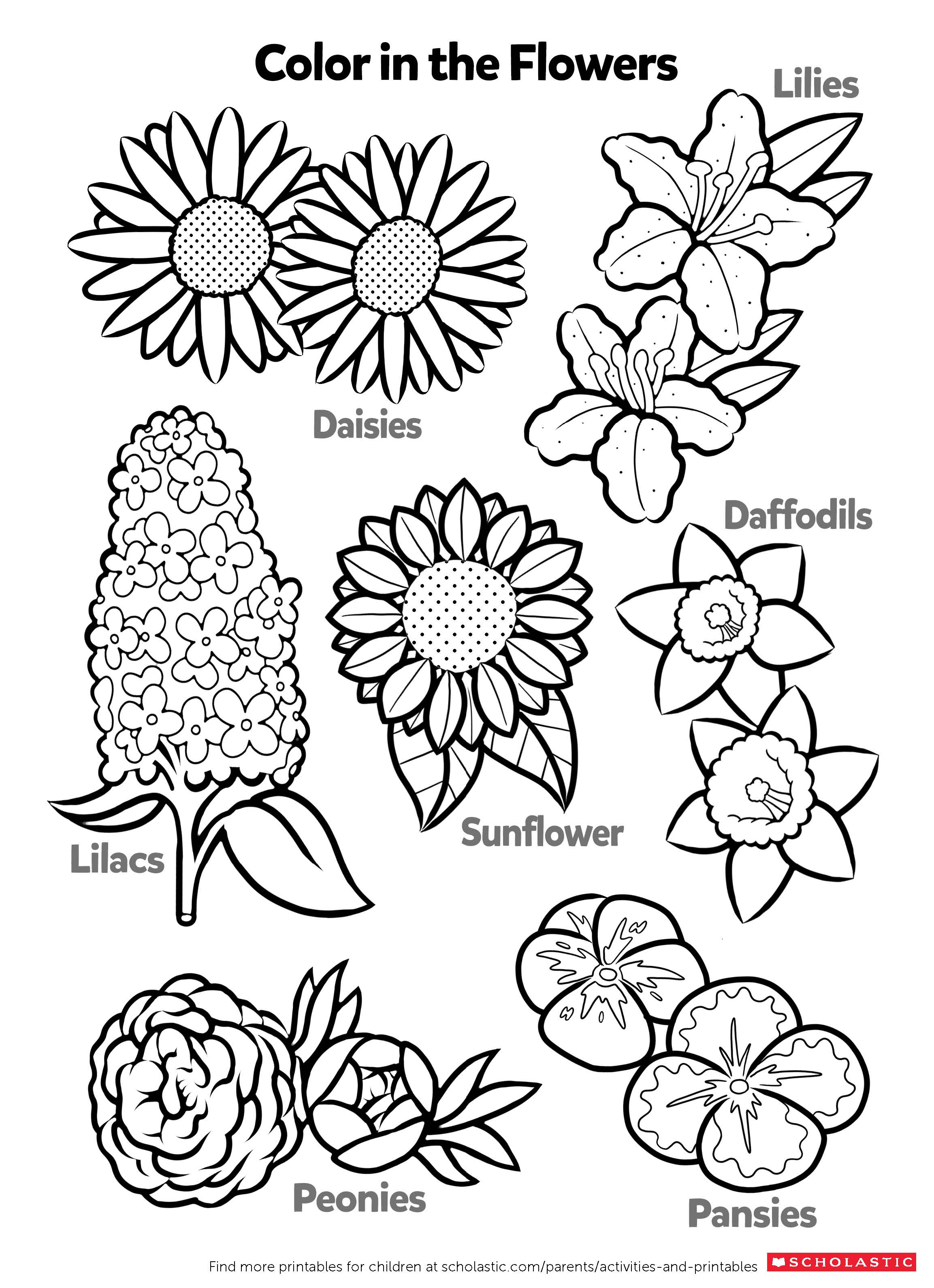 color page flower free printable flower coloring pages for kids color flower page