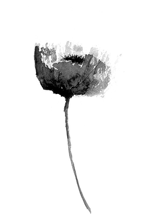 color poppy black and white poppy print from original watercolor color poppy