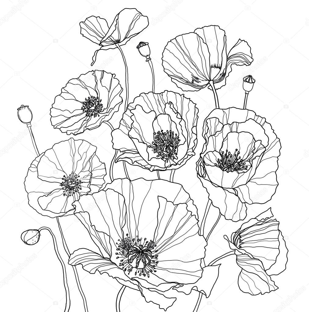 color poppy download coloring page with poppies stock image poppy color