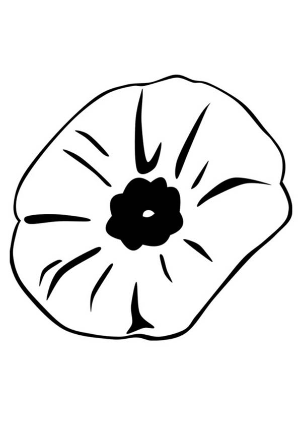 color poppy poppies coloring page remembrance day poppy coloring poppy color