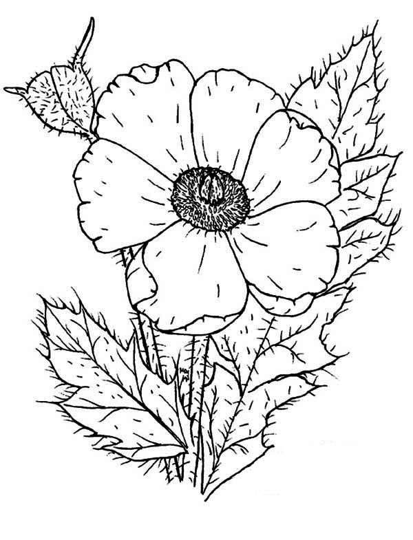 color poppy stained glass poppy coloring page free printable poppy color
