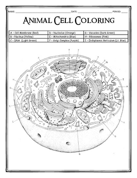 coloring animal cell worksheet answer key animal cell coloring key anatomy coloring book creation key animal cell answer worksheet coloring