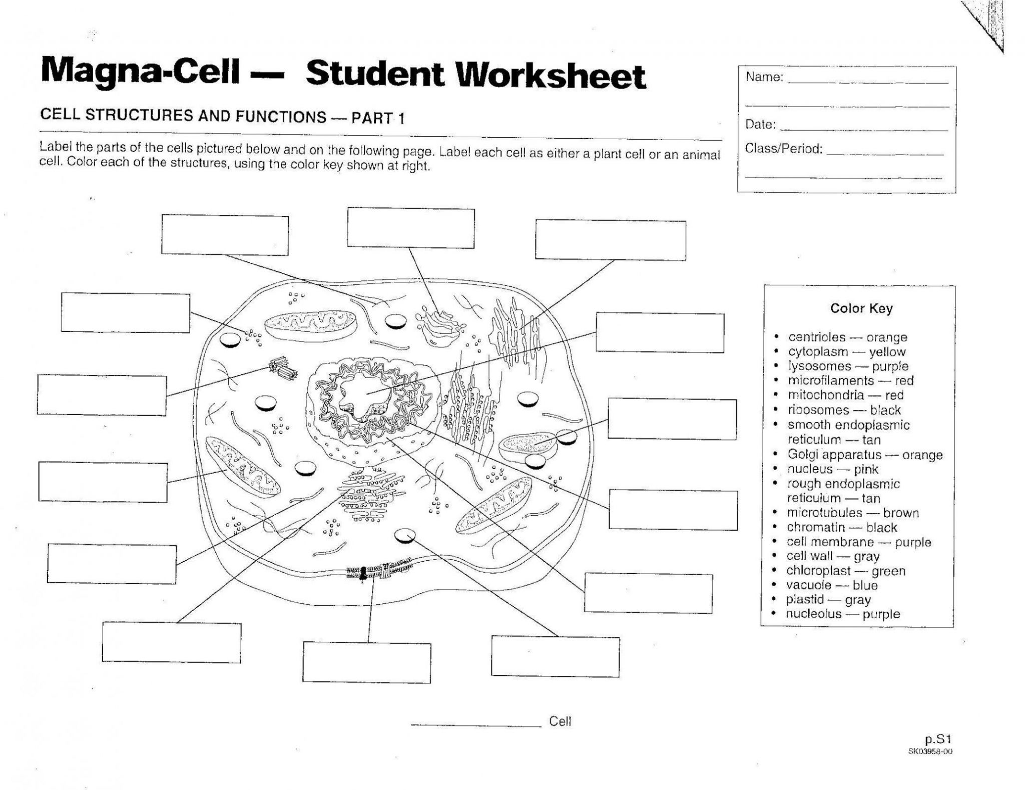 coloring animal cell worksheet answer key animal cell coloring worksheet by bioart teachers pay answer key coloring cell animal worksheet