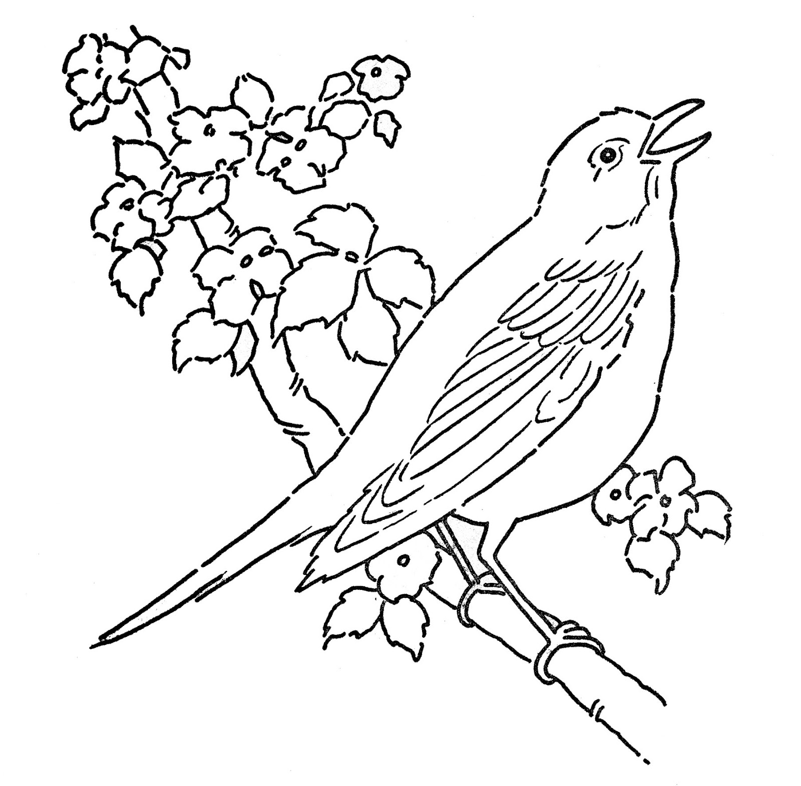 coloring birds for kids bird cage coloring page at getcoloringscom free coloring birds for kids