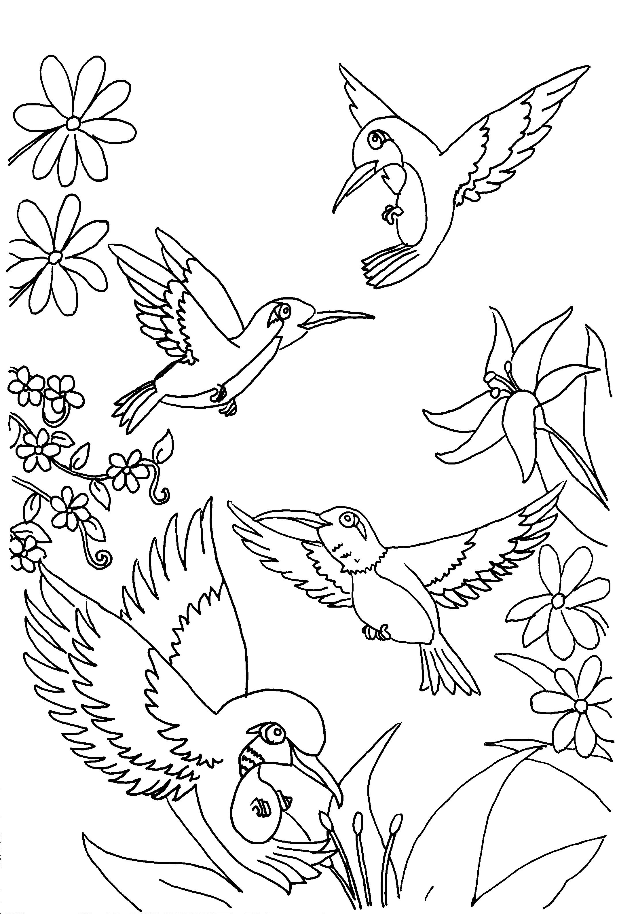 coloring birds for kids hummingbird coloring pages to download and print for free for kids coloring birds
