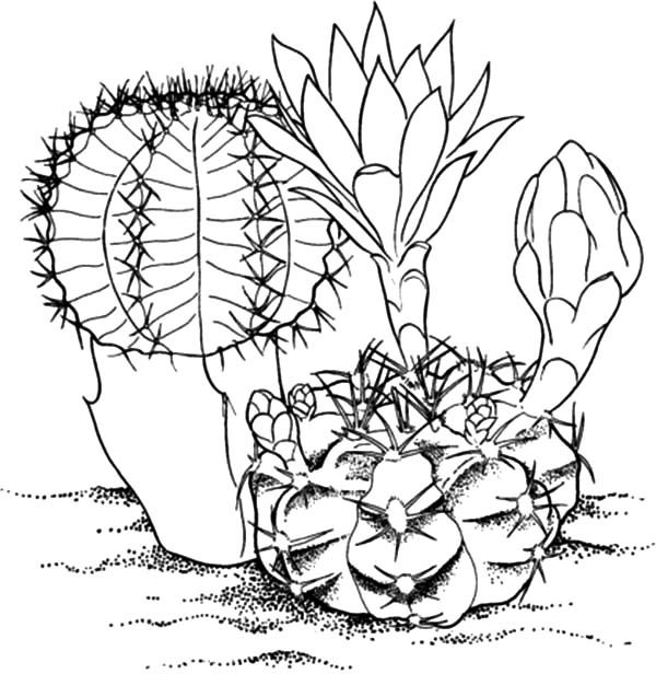 coloring cactus plant blooming cactus flower coloring pages best place to color cactus plant coloring