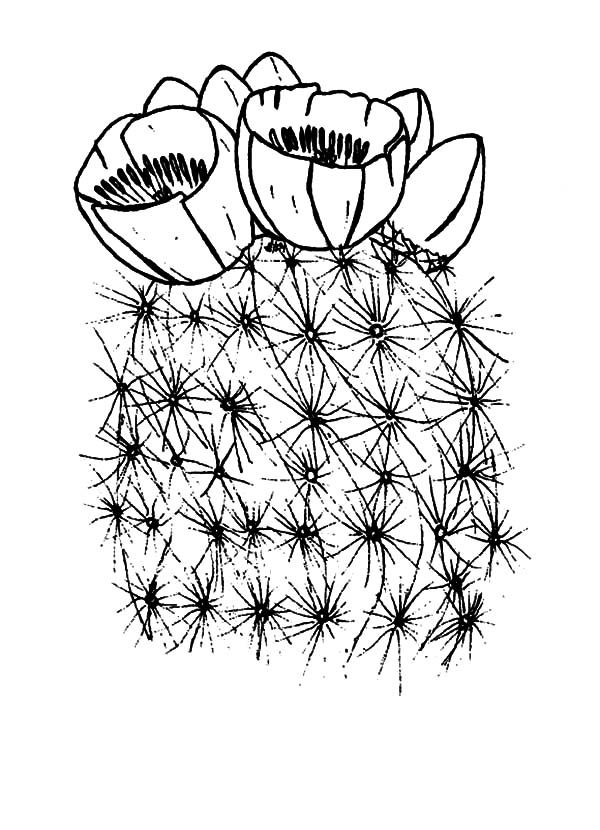 coloring cactus plant cactus coloring pages and printables coloring cactus plant