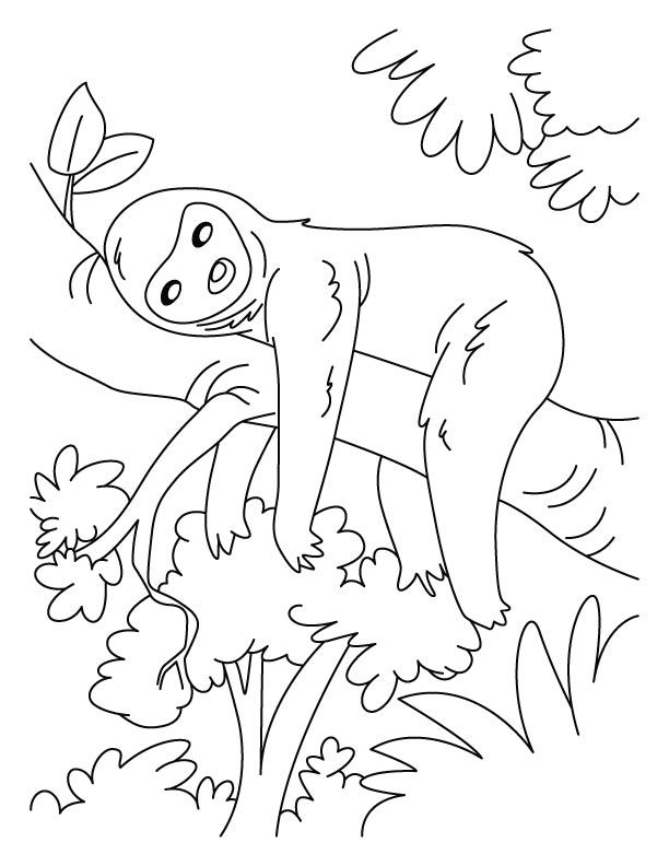 coloring cute sloth drawing baby sloth pages coloring pages sloth coloring cute drawing