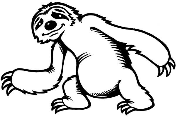 coloring cute sloth drawing coloring pages cute lazy sloth hangs on the tree stock sloth drawing cute coloring