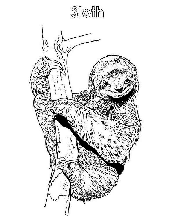 coloring cute sloth drawing s is for sloth coloring page color luna cute sloth coloring drawing