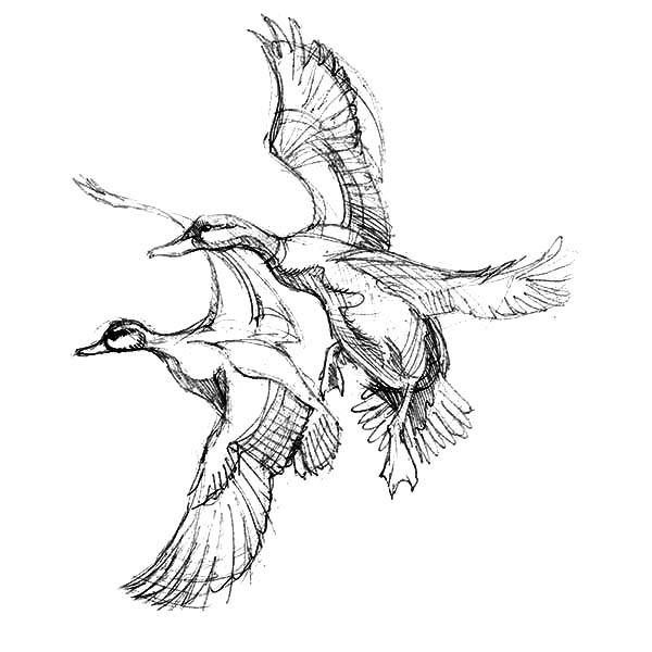 coloring duck line drawing best cute baby clipart black and white 27626 clipartioncom drawing coloring line duck