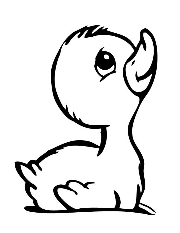 coloring duck line drawing daisy duck drawing at getdrawings free download coloring drawing duck line