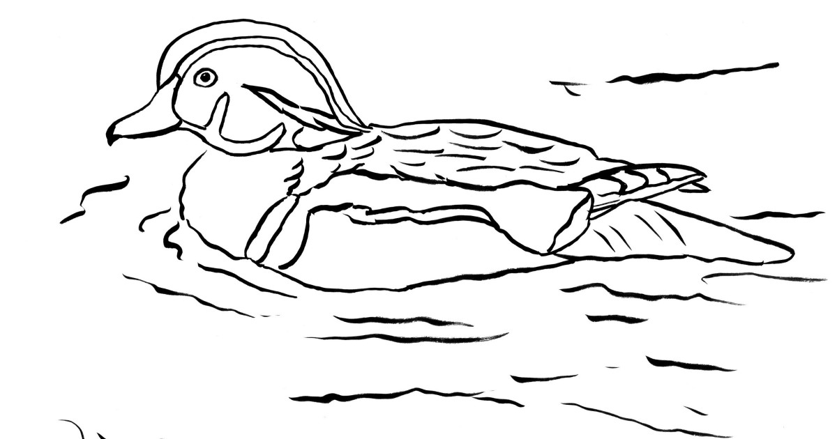 coloring duck line drawing duck lineart clipart best clipart best duck line coloring drawing