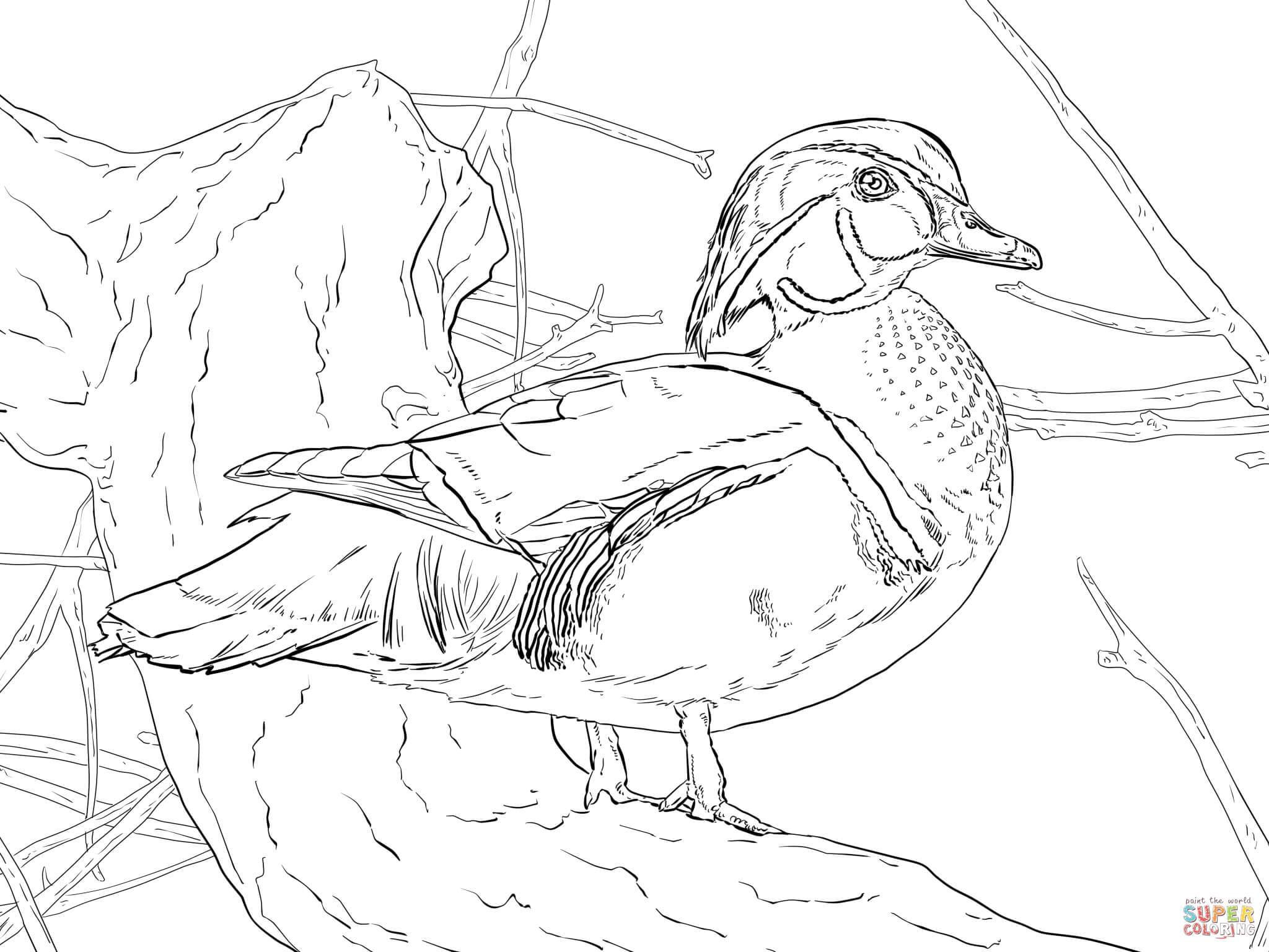 coloring duck line drawing duck outline with images basic drawing for kids coloring duck line drawing