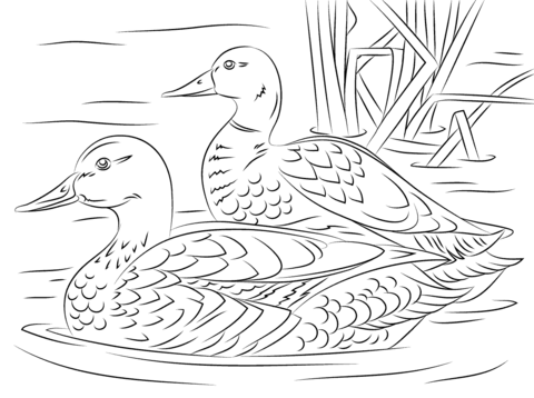 coloring duck line drawing wood duck drake coloring page free printable coloring pages drawing line coloring duck