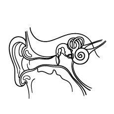 coloring ear print coloring picture momjunction anatomy coloring coloring ear