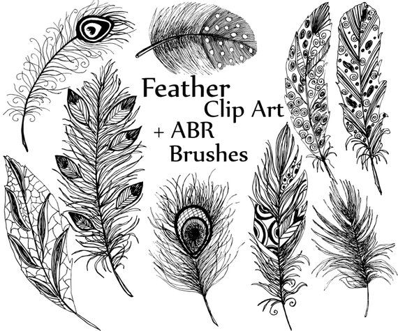 coloring face in photoshop feather clipart quotfeather silhouettesquot feather digital in photoshop coloring face