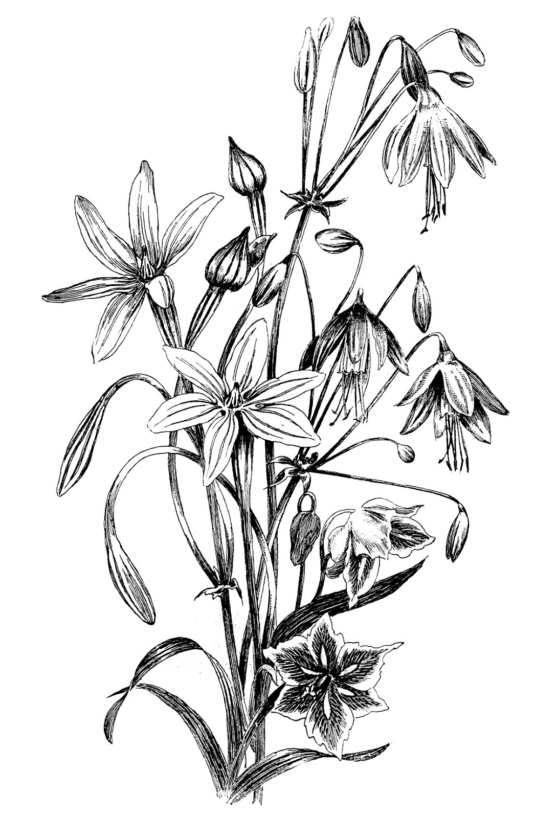 coloring flower clipart black and white black and white floral drawing the graphics fairy black flower coloring clipart white and