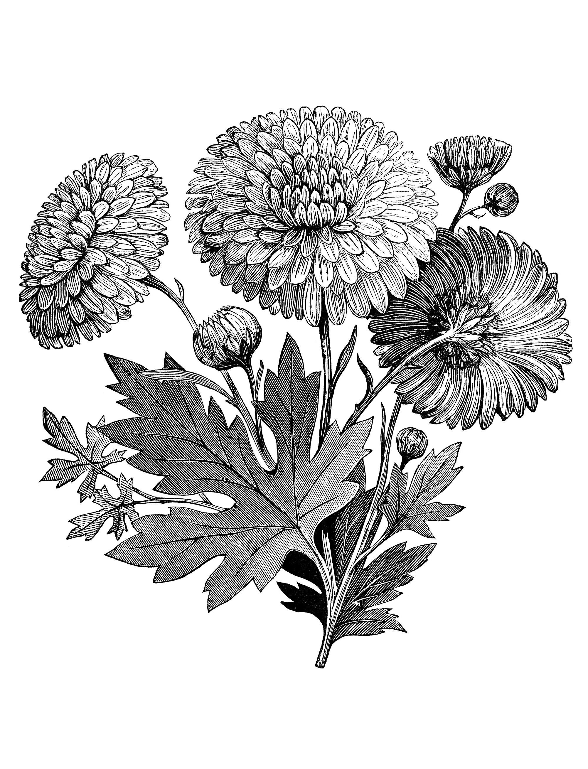 coloring flower clipart black and white flowers color clipart black and white 8 petal flower white and flower clipart black coloring
