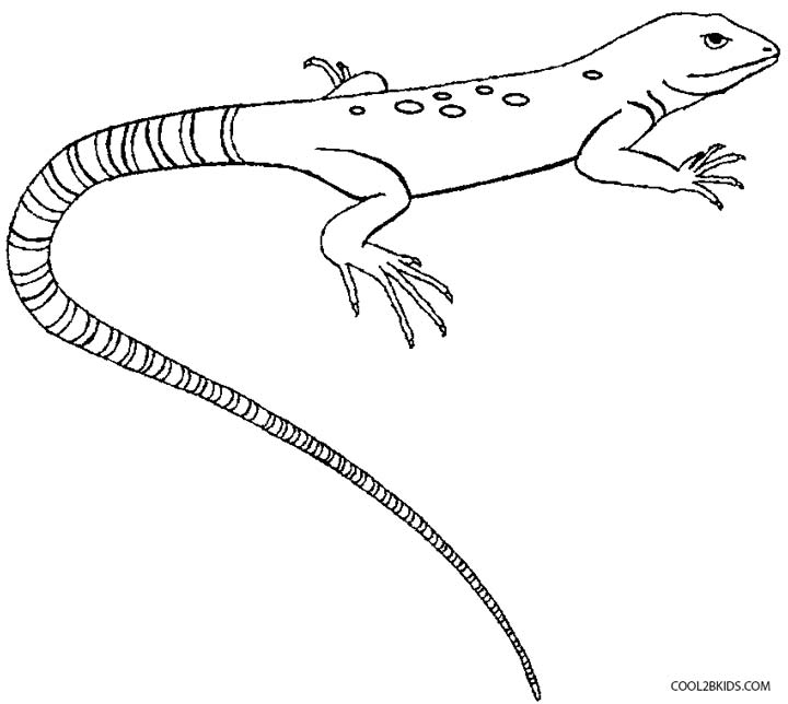 coloring page lizard free lizard coloring pages coloring lizard page 1 1