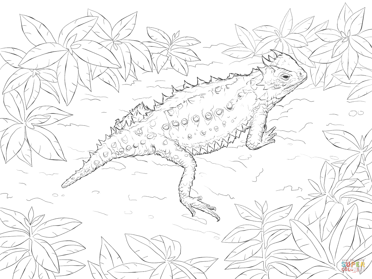 coloring page lizard lizard coloring pages cswd lizard page coloring