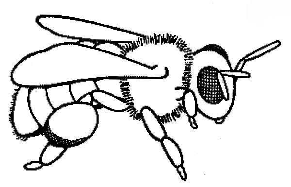 coloring page of bee baby honey bee coloring pages coloring sky of page bee coloring