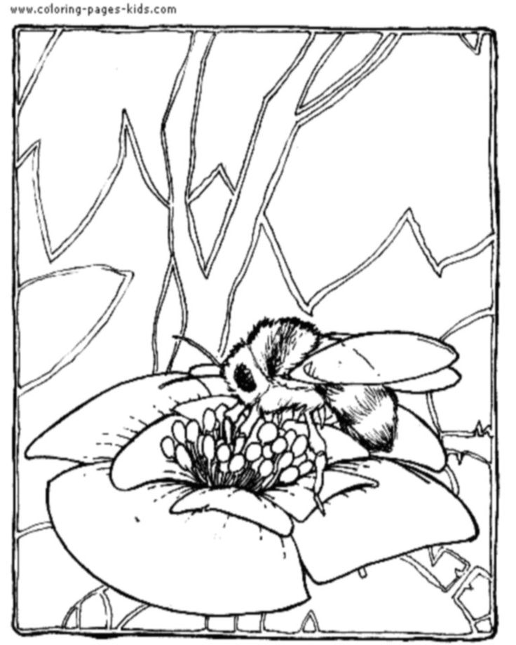 coloring page of bee bumble bee coloring page woo jr kids activities coloring page bee of