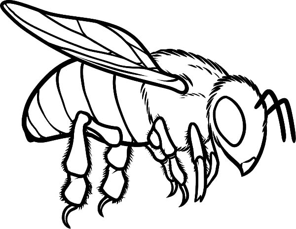 coloring page of bee european honey bee coloring pages coloring sky of bee coloring page