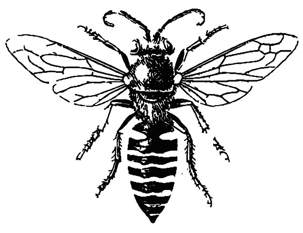 coloring page of bee free printable bee coloring pages for kids bee page coloring of