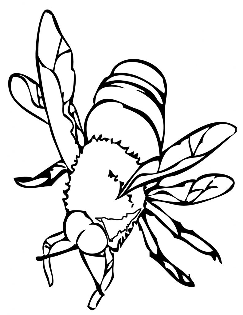 coloring page of bee free printable bee coloring pages for kids coloring of bee page