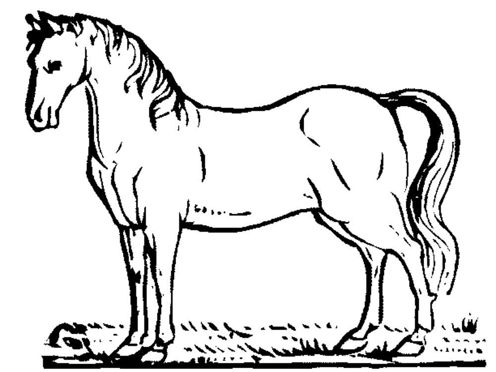 coloring page of horse 39 horse coloring pages for kids visual arts ideas page horse coloring of