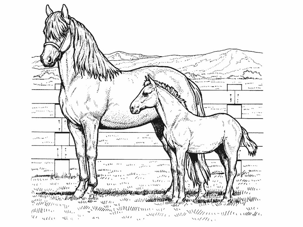 coloring page of horse realistic horse coloring pages to download and print for free page horse of coloring