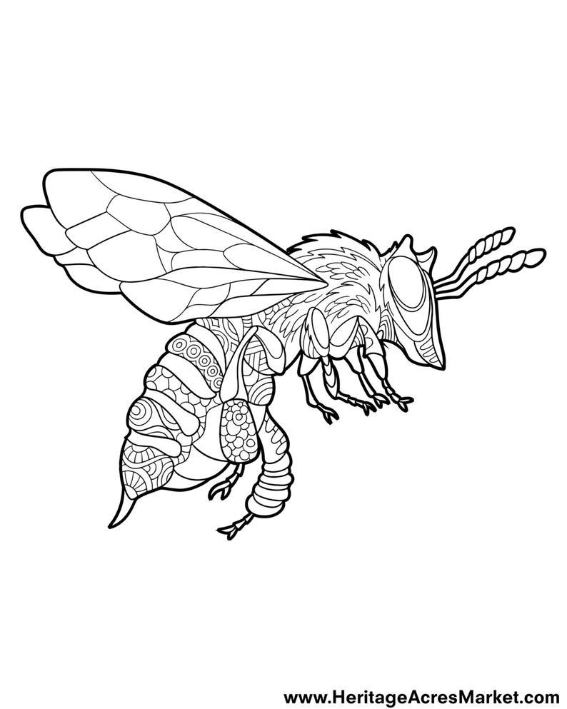 coloring page pdf free coloring pages pdf format at getcoloringscom free coloring page pdf