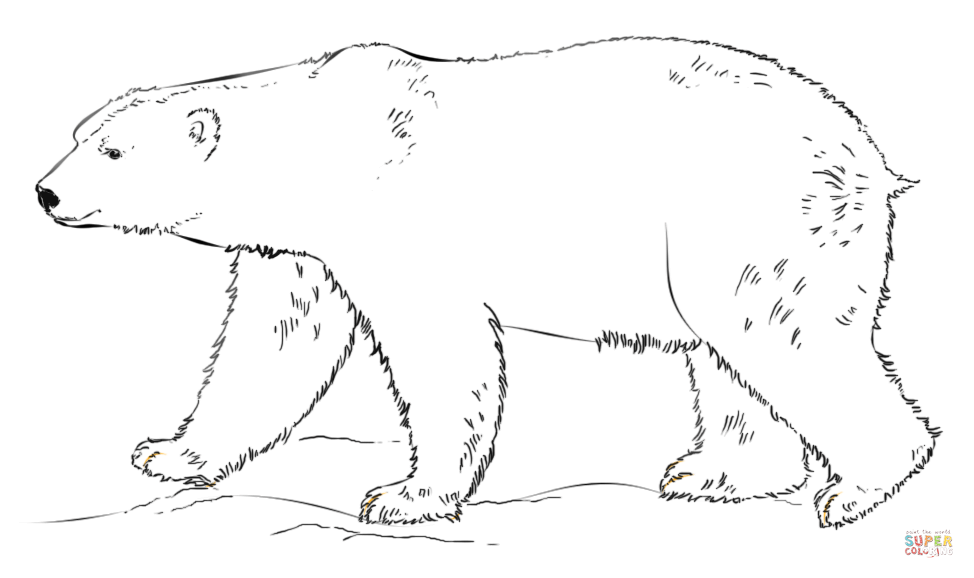 coloring page polar bear free polar bear coloring pages download and print polar polar bear coloring page
