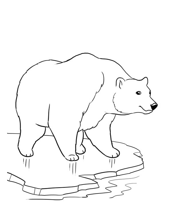 coloring page polar bear free printable polar bear coloring pages for kids polar bear coloring page
