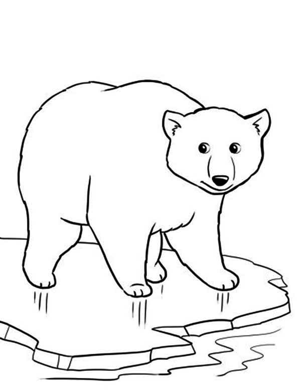 coloring page polar bear free printable polar bear coloring pages for kids polar coloring bear page