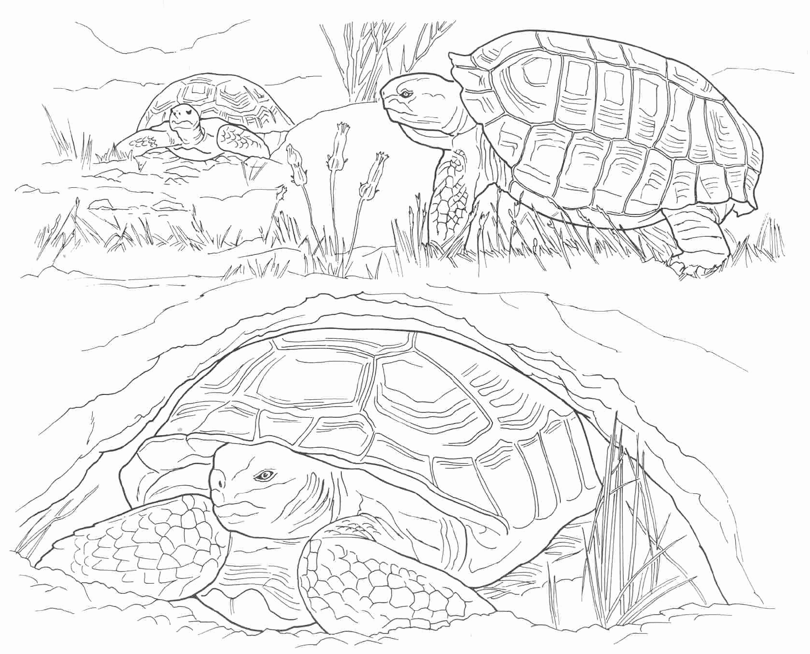 coloring pages 911 audio 911 colouring book slammed world cbc news 911 pages coloring