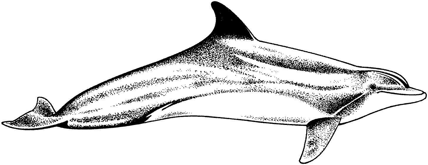 coloring pages dolphin realistic dolphin coloring pages at getcoloringscom dolphin pages coloring