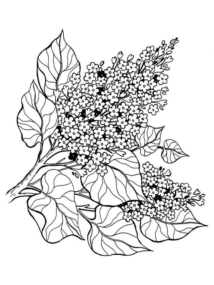 coloring pages flowers printable summer flowers coloring pages 10 free fun printable printable flowers pages coloring