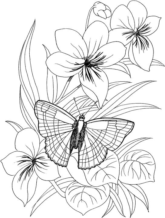 coloring pages flowers printable your free coloring pages for creativity and fun printable flowers pages coloring