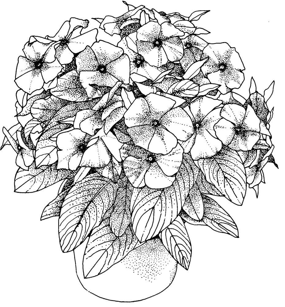 coloring pages for adults flowers adult coloring page petunias the graphics fairy flowers coloring for pages adults